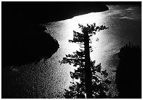 Backlit Tree and Diablo lake, North Cascades National Park Service Complex. Washington, USA. (black and white)
