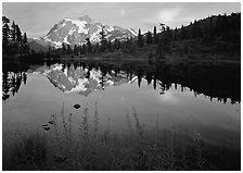 Fireweed, Mount Shuksan reflected in Picture lake, sunset. Washington, USA. (black and white)