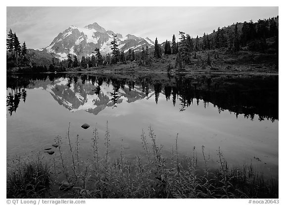 Fireweed flowers, lake with mountain reflections, Mt Shuksan, sunset. North Cascades National Park (black and white)