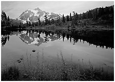 Fireweed flowers, lake with mountain reflections, Mt Shuksan, sunset, North Cascades National Park.  ( black and white)