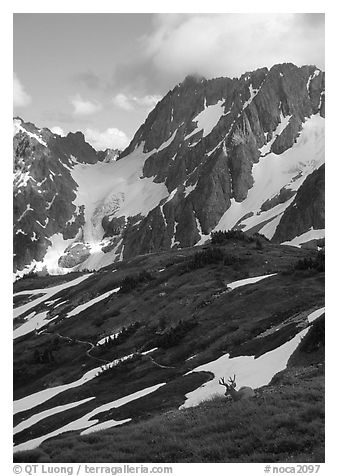 Elk and peaks, early summer, Sahale Arm, North Cascades National Park.  (black and white)