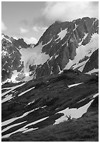 Elk and peaks, early summer, Sahale Arm, North Cascades National Park. Washington, USA. (black and white)