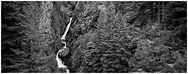 Waterfall in gorge surrounded by forest, North Cascades National Park Service Complex.  (Panoramic black and white)
