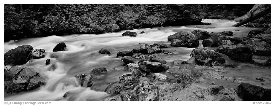 Stream in forest with colored mud, Mt. Baker/Snoqualmie National forest. Washington (black and white)