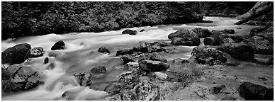 Stream in forest with colored mud, Mt. Baker/Snoqualmie National forest. Washington (Panoramic black and white)