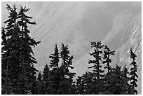 Conifers and hazy forested slope, North Cascades National Park. Washington, USA. (black and white)