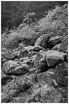 Rocks with green moss, autumn foliage, North Cascades National Park.  ( black and white)