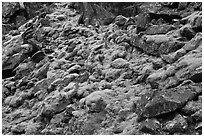 Mossy rocks, North Fork of the Cascade River, North Cascades National Park. Washington, USA. (black and white)