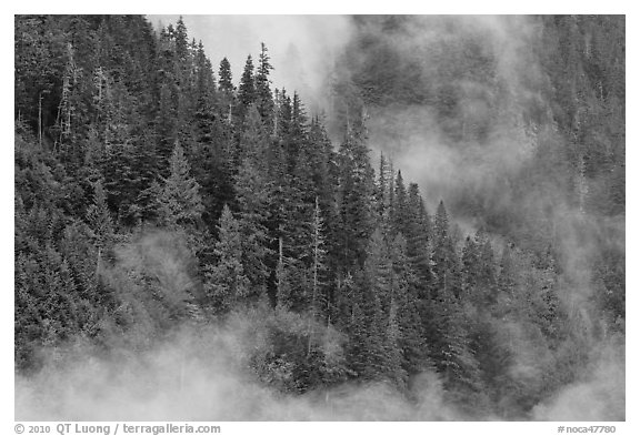 Tree ridge and fog, North Cascades National Park.  (black and white)
