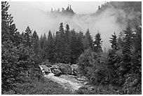 Stream, trees, and fog, North Cascades National Park.  ( black and white)