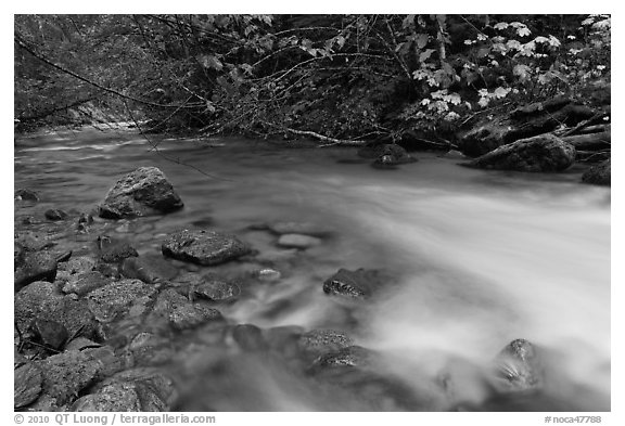 Smooth flow of North Fork of the Cascade River in the fall, North Cascades National Park.  (black and white)