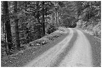 Cascade River Road, North Cascades National Park. Washington, USA. (black and white)