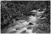 North Fork of the Cascade River from above, North Cascades National Park. Washington, USA. (black and white)