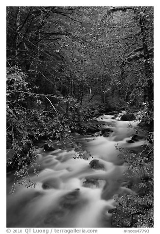 North Fork of the Cascade River, North Cascades National Park.  (black and white)