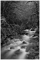 North Fork of the Cascade River, North Cascades National Park. Washington, USA. (black and white)