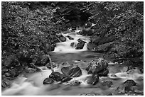 Sibley Creek, Mount Baker Snoqualmie National Forest. Washington (black and white)