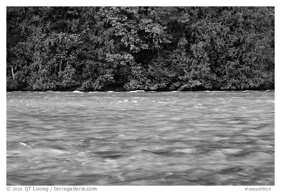 Skagit River during the fall salmon run, North Cascades National Park Service Complex.  (black and white)