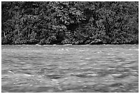 Skagit River during the fall salmon run, North Cascades National Park Service Complex. Washington, USA. (black and white)