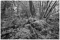Lush rainforest, North Cascades National Park Service Complex. Washington, USA. (black and white)