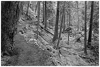 Trail in rainforest, North Cascades National Park Service Complex. Washington, USA. (black and white)