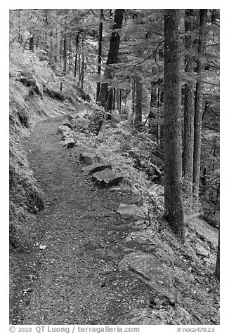 River Loop trail, North Cascades National Park Service Complex.  (black and white)