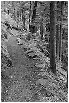 River Loop trail, North Cascades National Park Service Complex.  ( black and white)