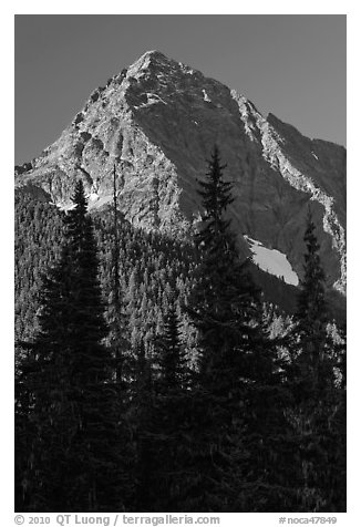 Greybeard Peak rising above forest, North Cascades National Park.  (black and white)