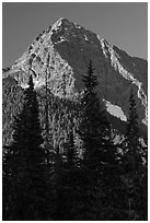 Greybeard Peak rising above forest, North Cascades National Park.  ( black and white)