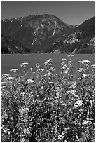 Summer wildflowers and Diablo Lake,  North Cascades National Park Service Complex.  ( black and white)