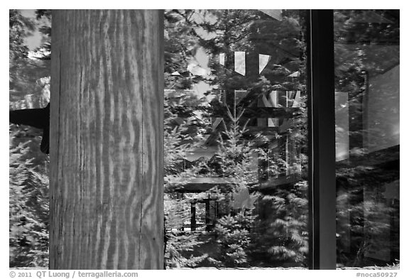Forest, Visitor Center window reflexion, North Cascades National Park.  (black and white)