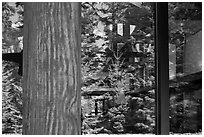 Forest, Visitor Center window reflexion, North Cascades National Park.  ( black and white)