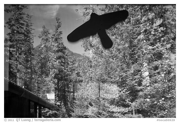 Forest and peak, Visitor Center window reflexion, North Cascades National Park.  (black and white)
