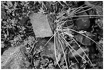 Close-up of blocks of rocks and berry plants, North Cascades National Park Service Complex.  ( black and white)