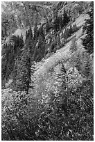 Steep slopes in autumn, North Cascades National Park Service Complex.  ( black and white)