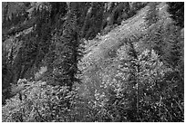 Slopes with shrubs in autumn foliage, scree, and spruce, North Cascades National Park Service Complex.  ( black and white)