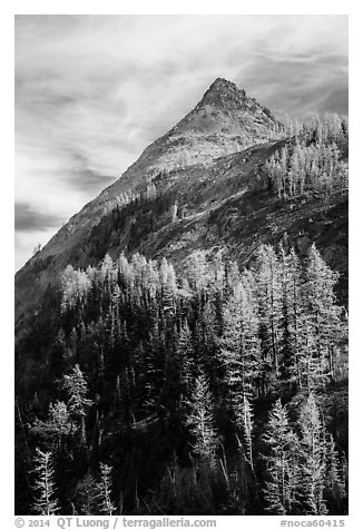 Larch trees in autumn foliage below triangular peak, Easy Pass, North Cascades National Park.  (black and white)
