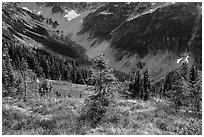 Fisher Creek Basin valley, North Cascades National Park.  ( black and white)