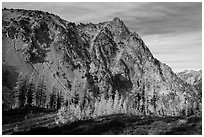Alpine larch in autumn and rocky peak above Easy Pass, North Cascades National Park.  ( black and white)