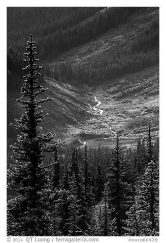Fisher Creek in autumn, North Cascades National Park.  (black and white)