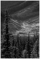 Fisher Creek in autumn, North Cascades National Park.  ( black and white)