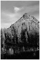 Alpine larch and peak at sunset, Easy Pass, North Cascades National Park.  ( black and white)