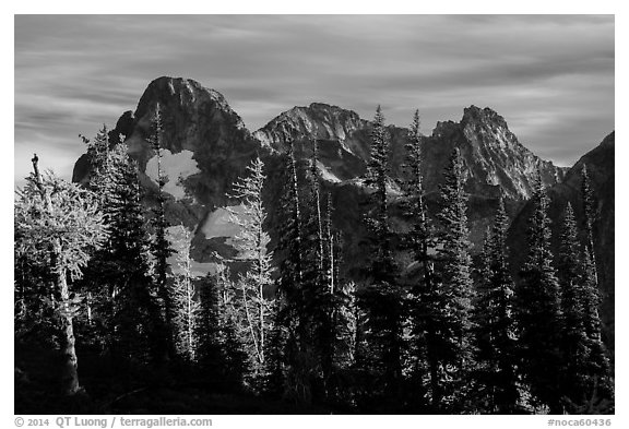 Fisher Peak trees at sunset, North Cascades National Park.  (black and white)