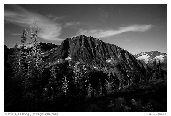 Larches and Mount Logan from Easy Pass at night, North Cascades National Park.  (black and white)