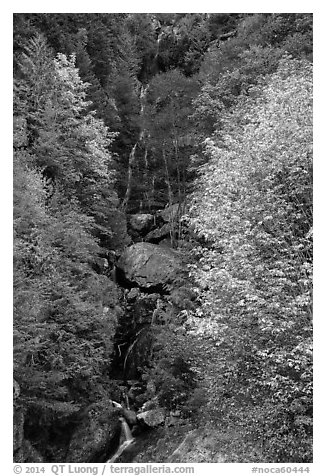Waterfall in autumn, North Cascades National Park Service Complex.  (black and white)