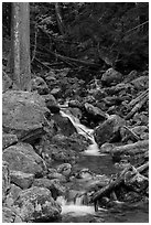 Creek with mossy boulders, North Cascades National Park Service Complex.  ( black and white)