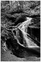 Creek cascading in forest, North Cascades National Park Service Complex.  ( black and white)