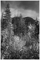 McGregor Mountain under dark sky in autumn, North Cascades National Park.  ( black and white)