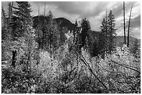Fall colors and McGregor Mountain, North Cascades National Park.  ( black and white)