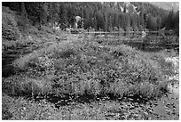 Coon Lake in the fall, North Cascades National Park Service Complex.  ( black and white)