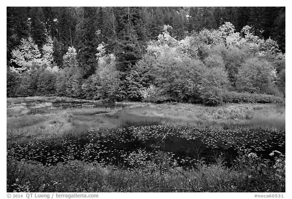 Pond in autumn, North Cascades National Park Service Complex.  (black and white)